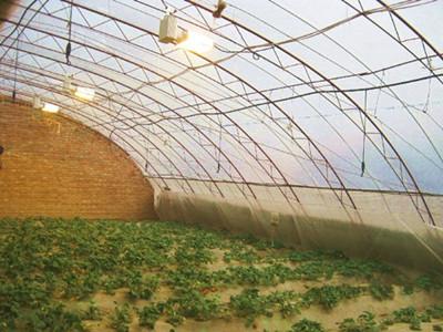 透明瓦钢结构蔬菜大棚图片