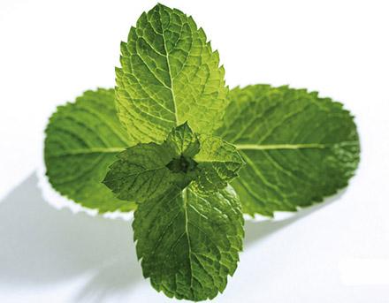 背景 壁纸 绿色 绿叶 蔬菜 树叶 植物 桌面 440_343