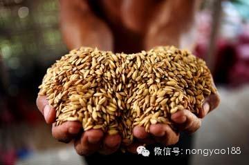 粮食安全成主角低毒农药迎来发展新机遇