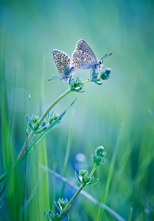 世界上最美蝴蝶梦(疯转上万次)
