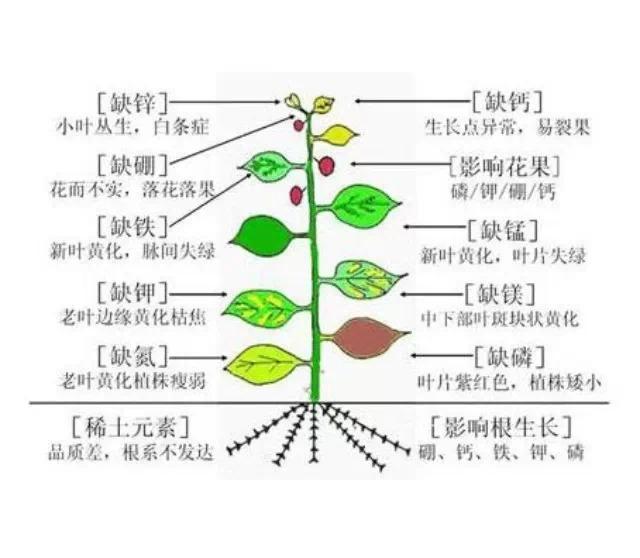 木桶理论 作物的产量是由最缺乏的那个营养元素所
