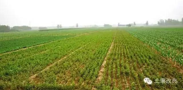 土壤施肥量怎么越来越多