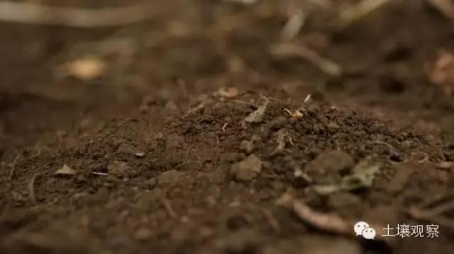 造就了土壤独特的结构并帮助植物继续演化,在远离水体的地方发展繁盛.