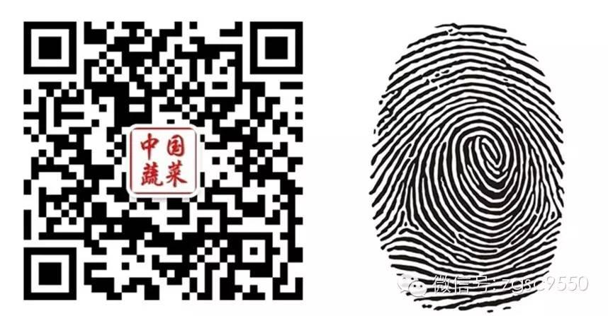 长按指纹  识别二维码 关注《中国蔬菜》