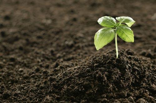 如何改善板结的花盆土壤