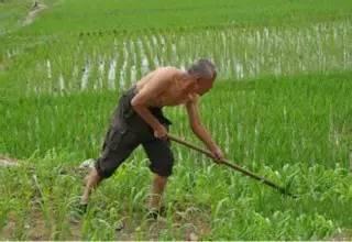 该不该种地了?农民真的看不懂!