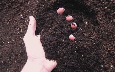 判断土壤酸碱性的7大诀窍