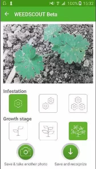 拜耳在巴西推出WeedScout应用软件 手机拍照识别杂草