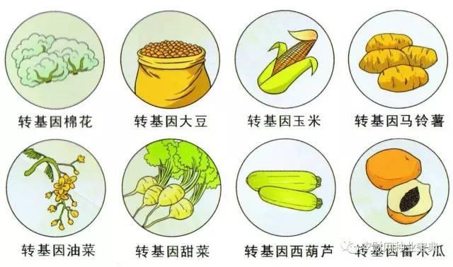 黑龙江将成为全国首个全面禁止转基因农作物省份