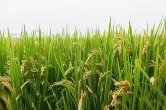 枯草芽孢杆菌既环保又增产,你了解多少?