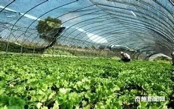 未来国家农业补贴会流向哪些领域?