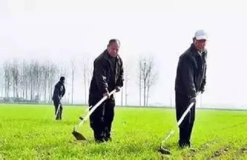 中国农民总结的种地顺口溜!