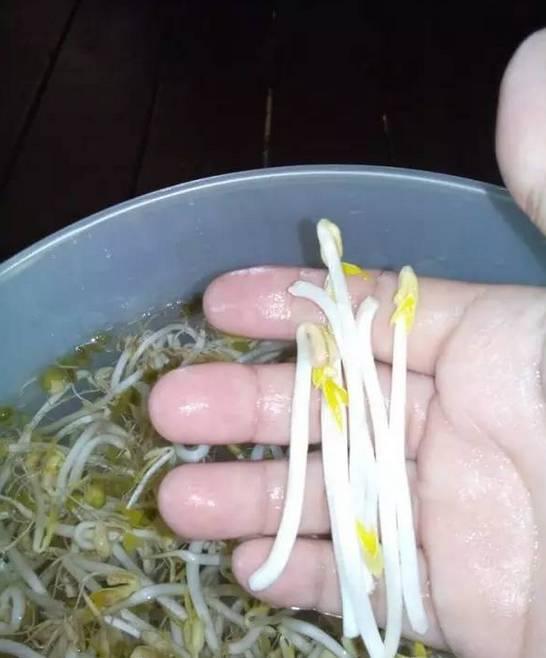 简单实用够健康,手把手教你种豆芽!