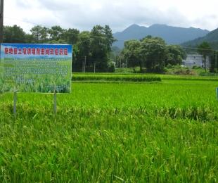 """""""施地佳""""连续两年同田四季水稻地酸化土壤调理示范应用"""