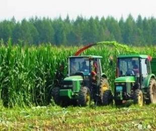 国家大放粮仓扩大玉米内需,玉米种植成农业热潮