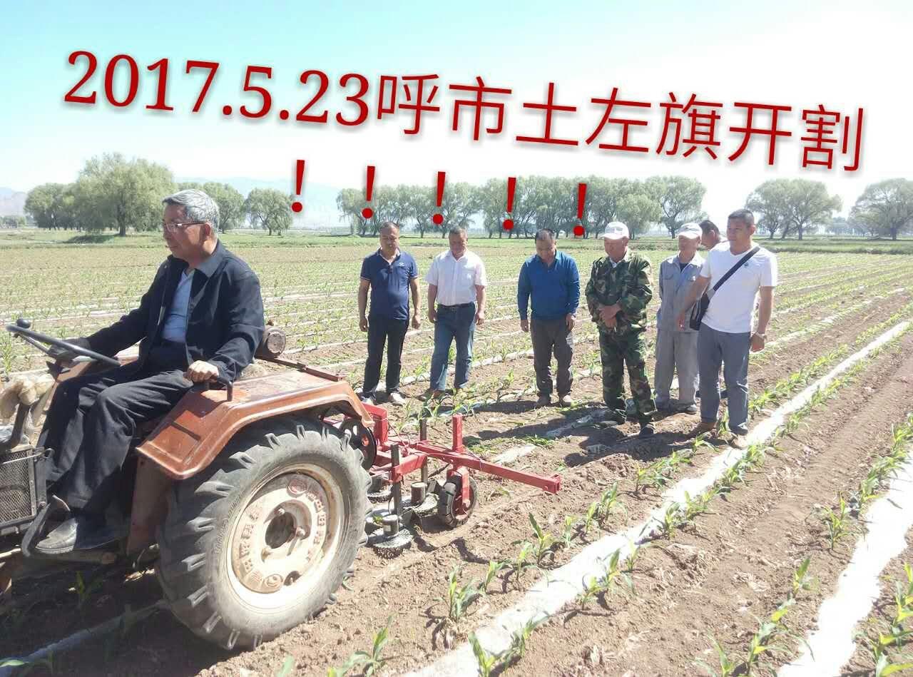 盘古玉米割苗技术继续走红,多地上演割苗大戏