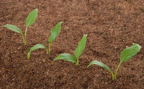 拒绝农业面源污染 从合理施肥做起