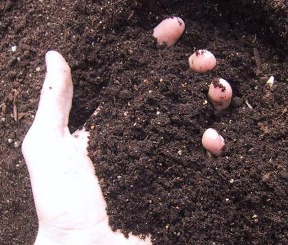 """看肥料工业4.0概述""""腐植酸+"""""""