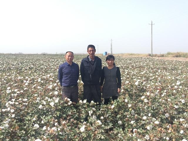相邻棉花地一家亩产40公斤,一家亩产500公斤以?