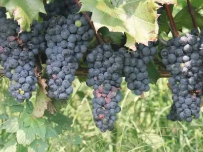 有机质对土壤肥力的七大作用