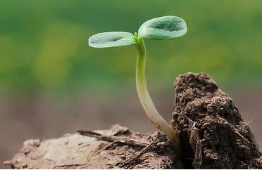 土壤酸化的3个成因 对芒果树的生长会有4大危害