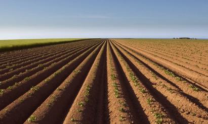果菜茶做肥料 改良土壤品质