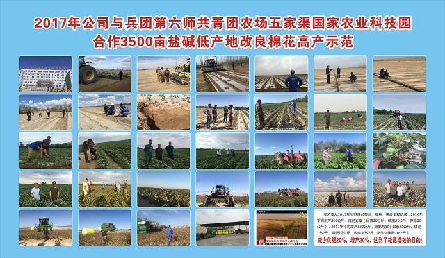 国家农业科技园3500亩盐碱地棉花减少化肥使用20%,收获增产20%
