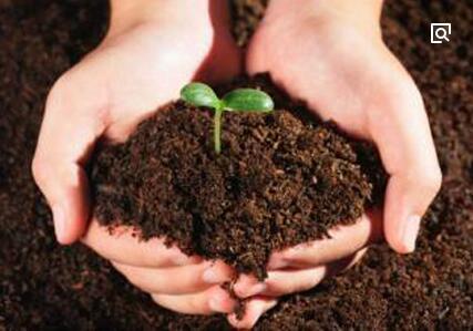 冬季土壤翻耕与施用有机肥