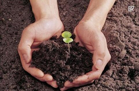 """卢彬:""""凭良心种地、生态种植""""的坚守者"""