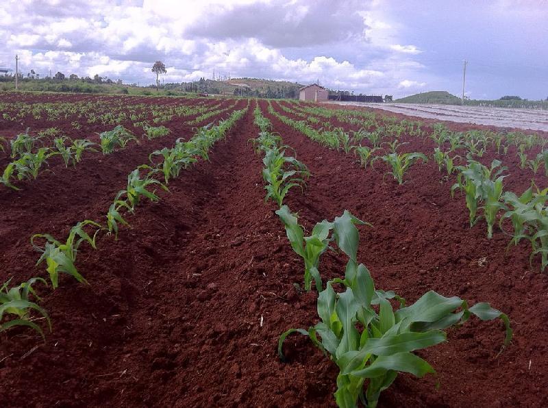 农村创业,卖化肥能挣钱吗?