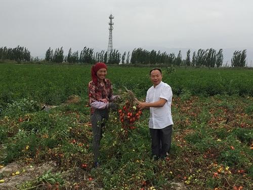 成都华宏生态携手巴州农科院防治番茄列当获成效