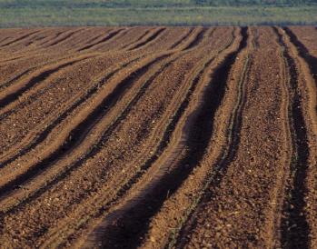 土壤修复再添利器