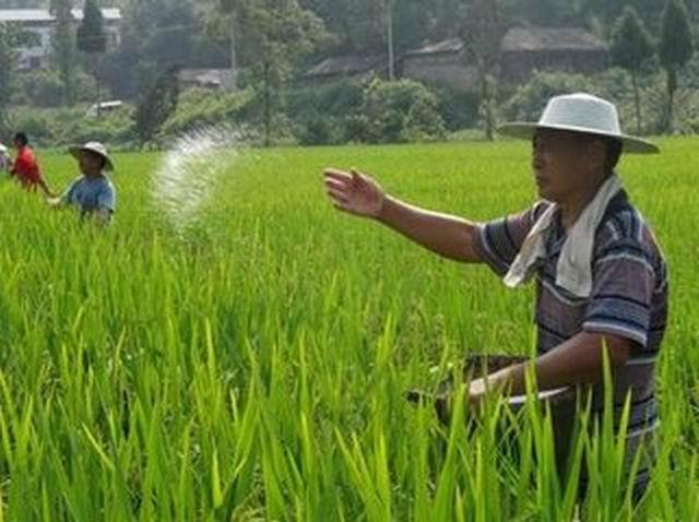 化肥涨价停不下来,农民开骂不解气