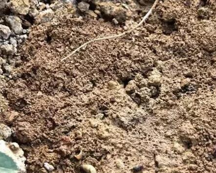 消除土壤板结危害的四种方法,你知道几种?