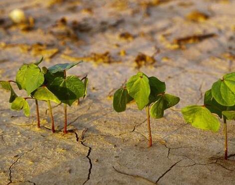 种地不高产,土壤是关键,2018你的土地还好吗?