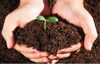 """土壤修复迎来""""大块头"""" 效果你可能想不到"""