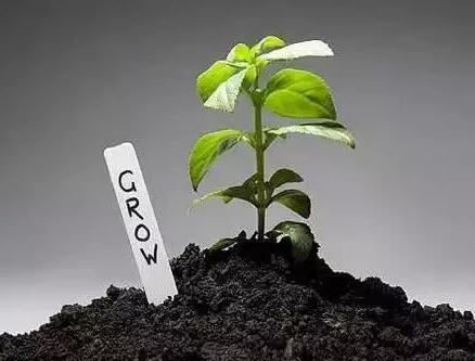 土壤有机质的七大核心作用!
