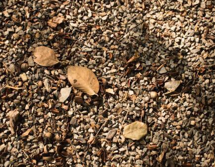 川西新农事:土壤改良结甜果