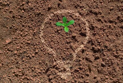科学的土壤管理,能保证苹果树高产、稳产、优质、长寿