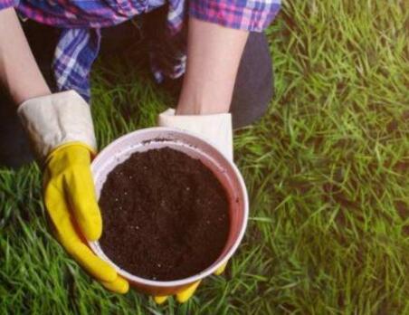 """没有""""有机质""""的土壤是万万不可以的!"""