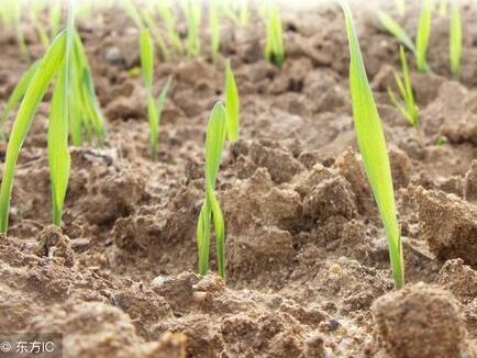碱性土壤怎么调理