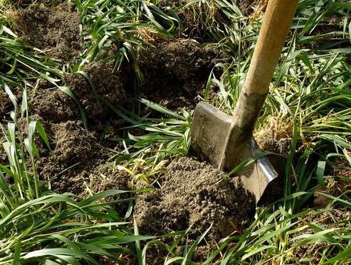 干好土壤修复精细活 这几大要素缺一不可