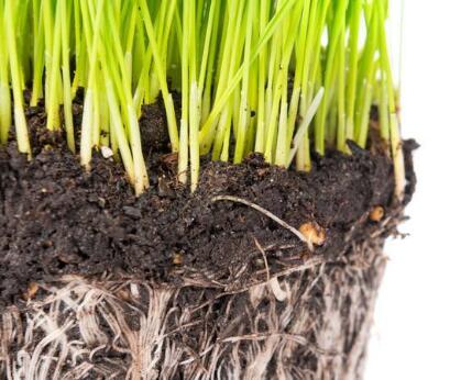 蔬菜棚室土壤酸化的改良措施