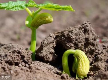 土壤酸碱度对作物生长影响很大,几个判断土壤酸碱性的方法