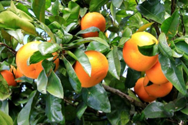 究竟是什么时候种果树最佳?你还以为只能是清明前后吗?