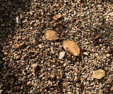 让土壤焕发生态活力