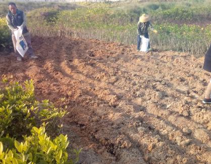 土壤改良全过程