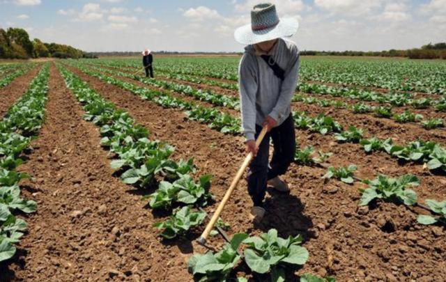 农民创业为何屡屡失败?这几个雷区,种植项目一定要注意!