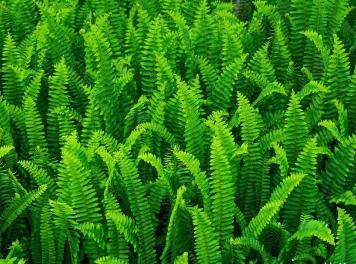 长相奇怪的野草,活着没什么价值,死后是改良土壤的活宝