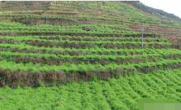 如何有效调节土壤有机质